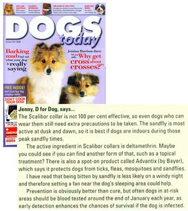 Dogs Today October 2011