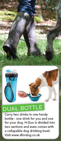 dog walking must have items