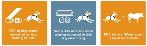 Kurgo dog car travel infographic