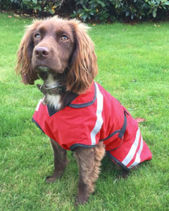 lightweight waterproof dog coat with bespoke made to fit option