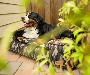 Lounger Camouflage Dog Bed