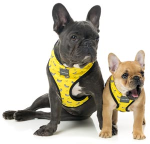 Banana design yellow dog harness