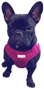 Neo-Flex padded chest support dog harness