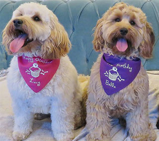 personalised dog birthday bandana