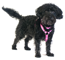 plain pink dog harness