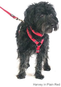 plain red dog harness