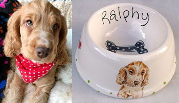 portrait spaniel dog bowl examples