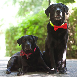Bow Wow Dog Bow Ties