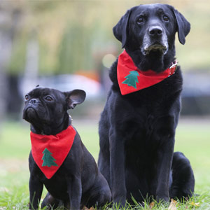 Christmas Dog Bandana - Xmas Tree