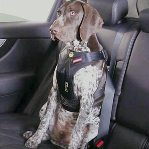 EzyDog Drive Dog Car Harness
