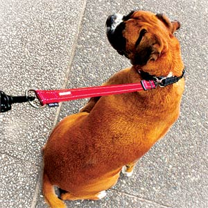 Soft Webbing Dog Lead Extension