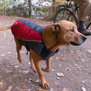 EzyDog Element Jackets