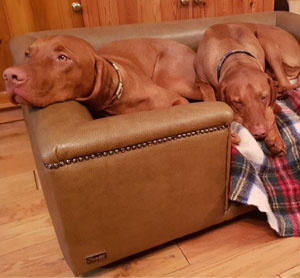 Sandringham Camel Faux Leather Dog Bed