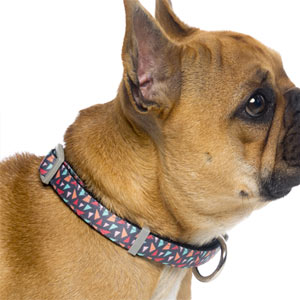 FuzzYard Dog Collar - Rad