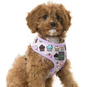 FuzzYard Dog Harness - Fresh Cupcakes