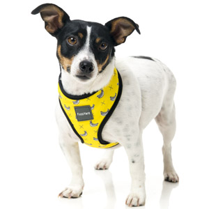 FuzzYard Dog Harness - Monkey Mania