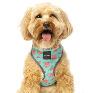 FuzzYard Dog Harness - Summer Punch