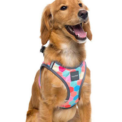 FuzzYard Step-in Dog Harness - The Hive