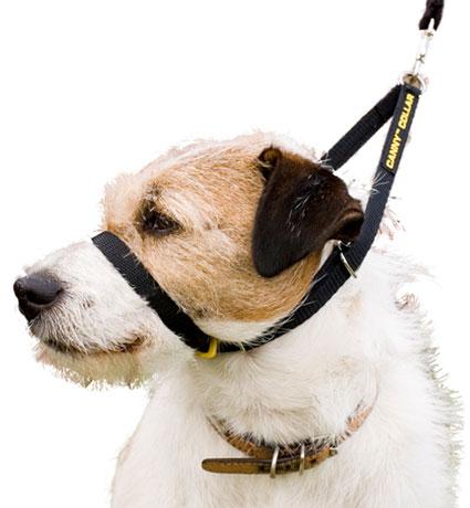 Canny Collar Award Winning Dog Training Collar
