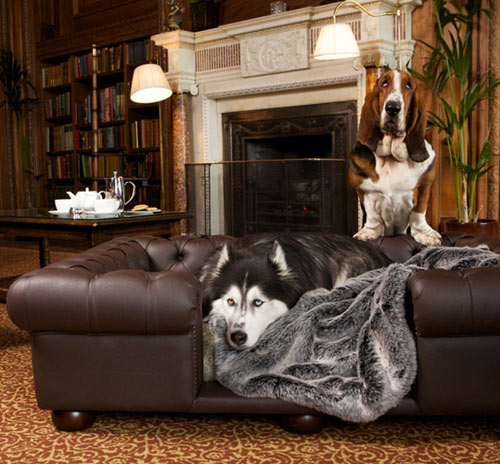 Balmoral Brown Leather Dog Sofa