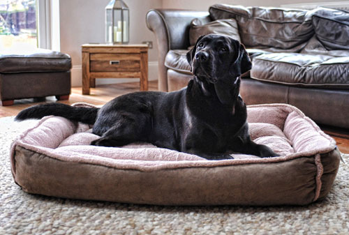 giant cradle dog bed | very large & giant breeds