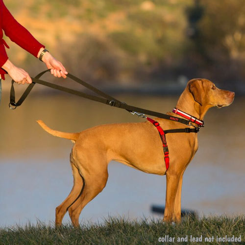 Dog Training Collars To Stop Pulling