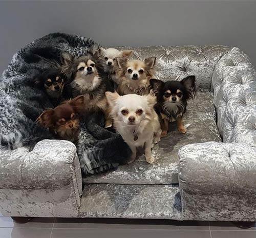 Sensational Balmoral Silver Velvet Luxury Dog Sofa Interior Design Ideas Helimdqseriescom