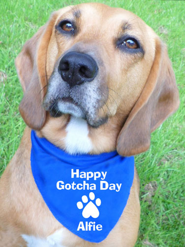 Personalised Dog Gotcha Day Bandana Rescue Dogs