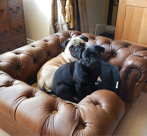 Balmoral Real Leather Dog Sofa