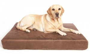 memory foam dog mattress