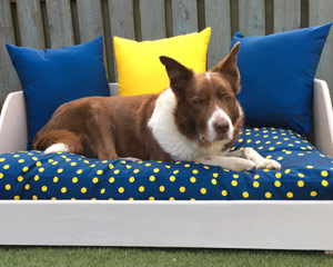 Miaboo Luxury Wooden Dog Bed - Lazy Day