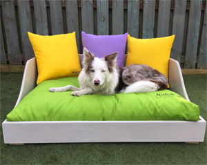 Miaboo Luxury Wooden Dog Bed - Springtime