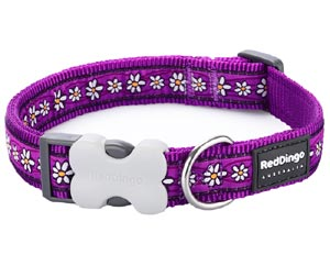 Red Dingo Dog Collar Daisy Chain Purple