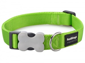 Red Dingo Lime Green Dog Collar