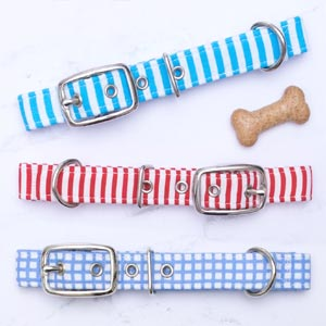 Summer Fete Dog Collar