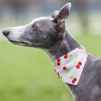 Dog Bandana Sweet Cherry