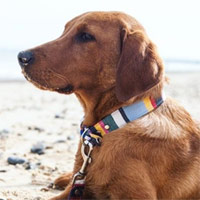Fabric Dog Collar Blue Deckchair
