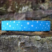Turquoise Drift Dog Collar