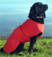 Freckles Dog Drying Coat - Underbelly