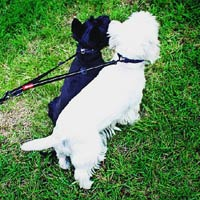 Soft Webbing Coupler LITE - Dual Dog Walking