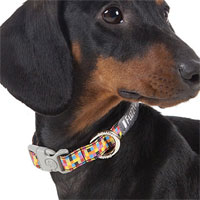 FuzzYard Dog Collar - 1983