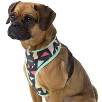 FuzzYard Dog Harness - Rad