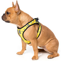 FuzzYard Step-in Dog Harness - Monkey Mania