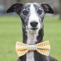 Gingham Dog Bow Ties