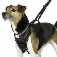 Halti Training - No Pull Harness