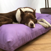 Miaboo Luxury Cushion Dog Bed - Bold