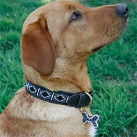 Beaded Leather Dog Collar - Rafiki