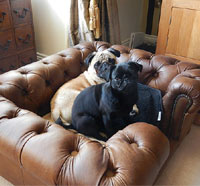 Balmoral Natural Real Leather Dog Sofa