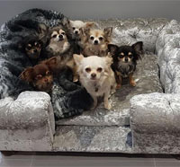 Balmoral Silver Velvet Luxury Dog Sofa