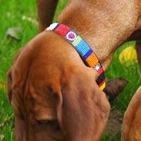 Masai Beaded Dog Collar - Bright